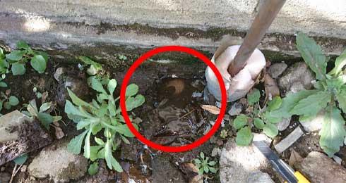 屋外の地面から水が出てくる漏水
